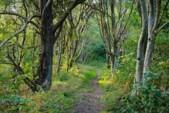 Vinnarbild skogsglänta 2.jpg